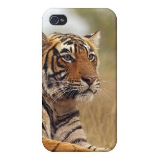Tigre de Bengale royal - une fin, Ranthambhor Étuis iPhone 4