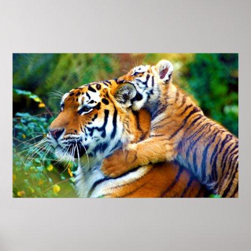 Tigre de mère avec l'escalade de CUB de bébé et l' Posters