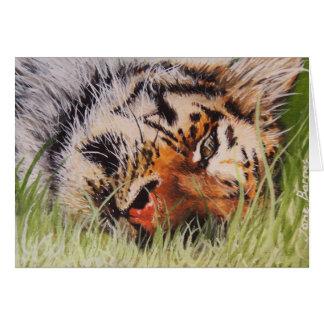 Tigre de repos cartes