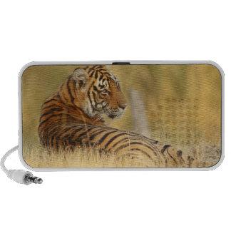 Tigre de Royale Bengale se reposant en dehors du Haut-parleurs Notebook