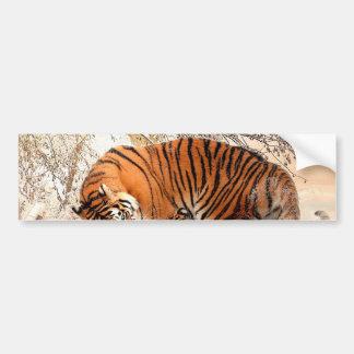 Tigre et petit animal - tigre autocollant de voiture
