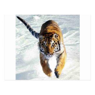 Tigre fonctionnant dans la neige carte postale