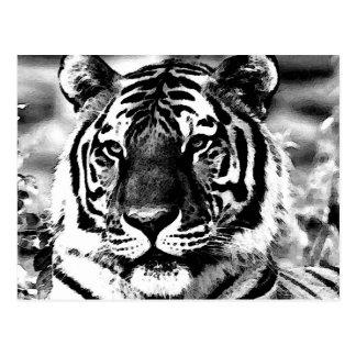 Tigre noir et blanc cartes postales