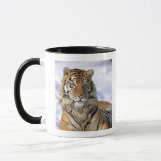 Tigre sibérien, altaica du Tigre de Panthera, Tasses
