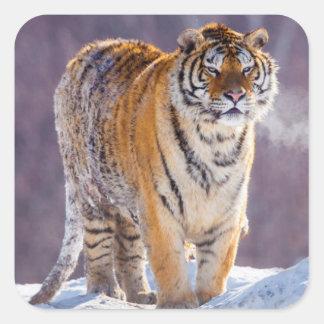 Tigre sibérien dans la neige, Chine Sticker Carré