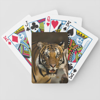 Tigre sibérien jeu de cartes