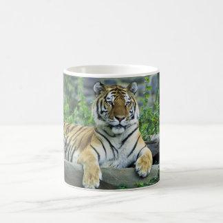 Tigre, sibérien mug