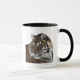 Tigre sibérien (Panthera Tigre Altaica) Tasse