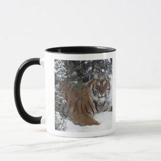Tigre sibérien (Panthera Tigre Altaica) Tasses