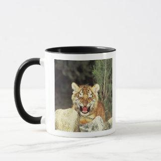 Tigre sibérien tasses