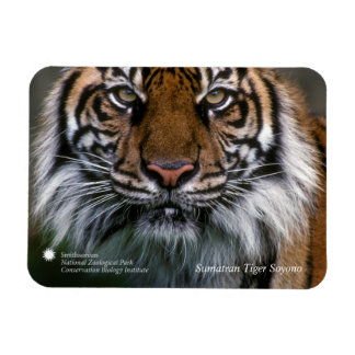 Tigre Soyono de Smithsonien | Sumatran Magnets Rectangulaires