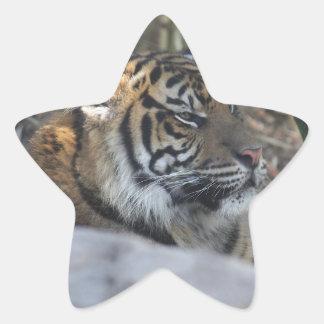 Tigre Sticker Étoile