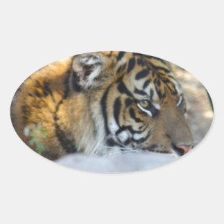 Tigre Sticker Ovale
