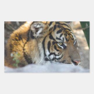 Tigre Sticker Rectangulaire