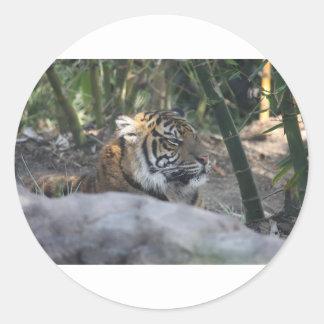 Tigre Sticker Rond