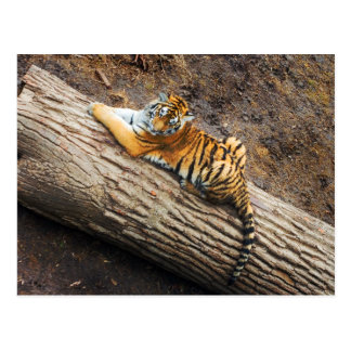 Tigre sur une carte postale de photo de rondin