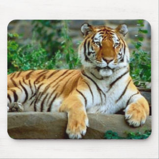 Tigre Tapis De Souris