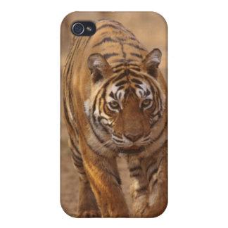 Tigres de Bengale royaux sur la voie, Ranthambhor Coque iPhone 4 Et 4S