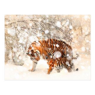 Tigres d'hiver carte postale