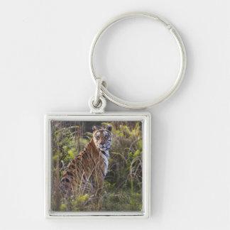 Tigresse du Bengale dans l'herbe grande, essayant  Porte-clé Carré Argenté