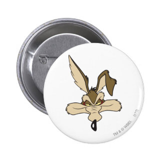 Tir principal d'E. Coyote Pleased de Wile Badges