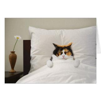 Tirez à carte bonne de chat le meilleur parti