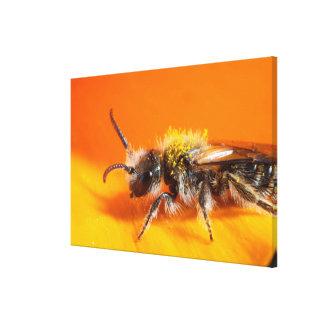 Toile Abeille pollinisant une fleur