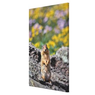 Toile Alerte d'écureuil moulu pour le danger