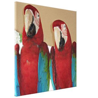 Toile Aras rouges, bleus, verts (perroquets)