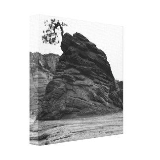 Toile Arbre dans la roche chez Zion