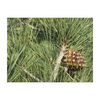 Toile Arbre de la Californie de plan rapproché de pin de