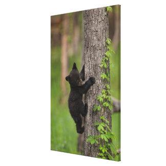 Toile Arbre d'escalade de CUB d'ours noir