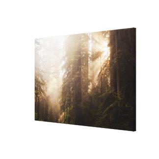 Toile Arbres de séquoia en brouillard de matin avec des
