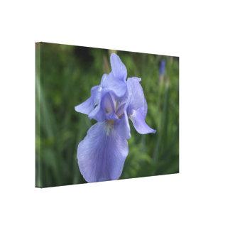 Toile assez bleue de fleur d'iris