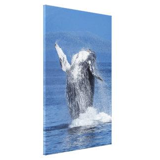 Toile Baleine de bosse