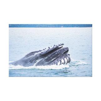 Toile baleine de bosse en Alaska