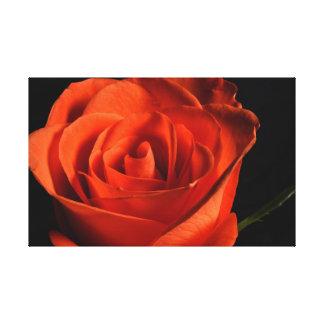 Toile Beau rose rouge sur l'arrière - plan noir
