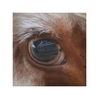 Toile Beauté dans l'oeil de la vache à spectateur