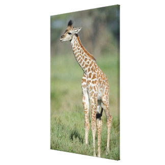 Toile Bébé de girafe de Massai