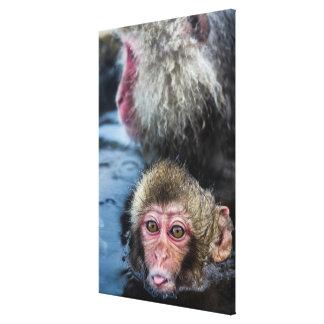 Toile Bébé japonais de Macaque
