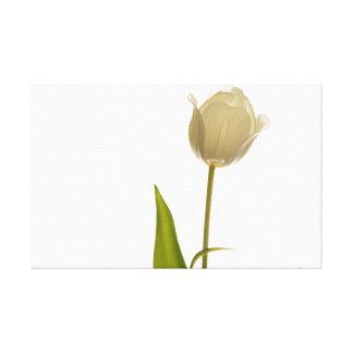 Toile Belle tulipe blanche sur l'arrière - plan blanc