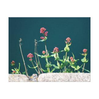 Toile Belles fleurs et eau en gros plan de rose de photo