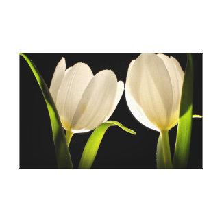 Toile Belles tulipes blanches sur l'arrière - plan noir
