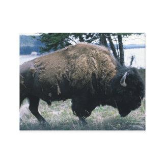 Toile Bison de Yellowstone