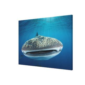 Toile Bouche de requin de baleine