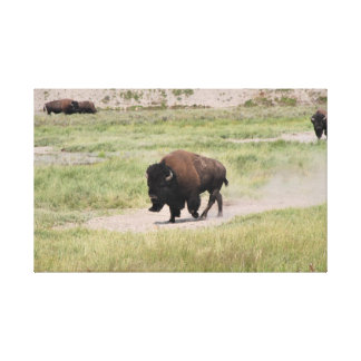 Toile Buffalo sur le mouvement, photographie