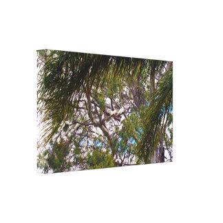 Toile Cacatoès australiens sauvages dans des arbres de