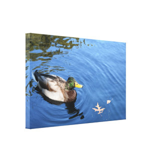 Toile Canard conservateur de Mallard de l'eau du Central