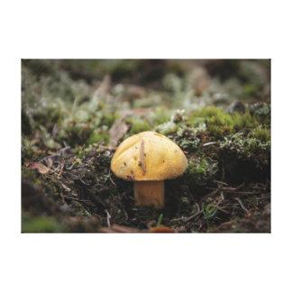 Toile Champignon jaune