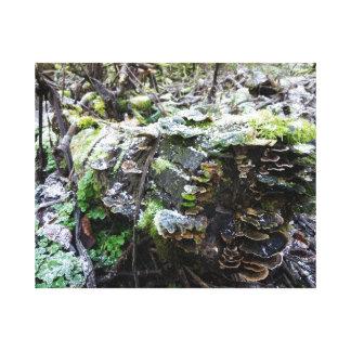 Toile champignon sur un rondin
